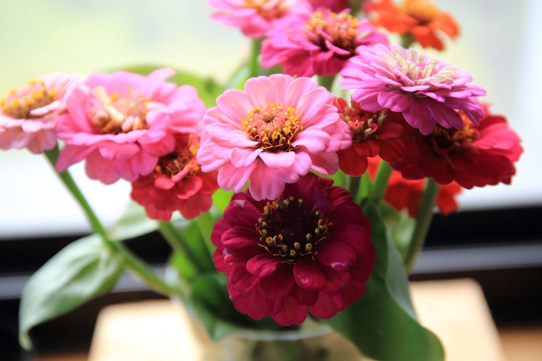 ブログ 家に飾った花 1.jpg