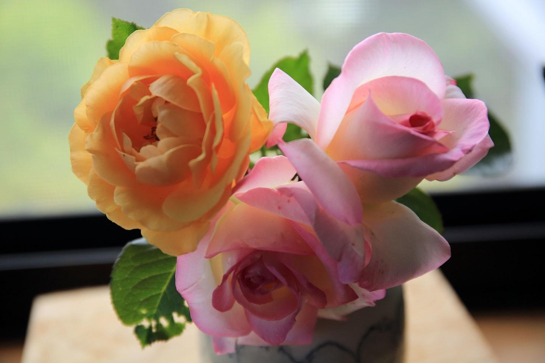 ブログ 家に飾った花 2.jpg
