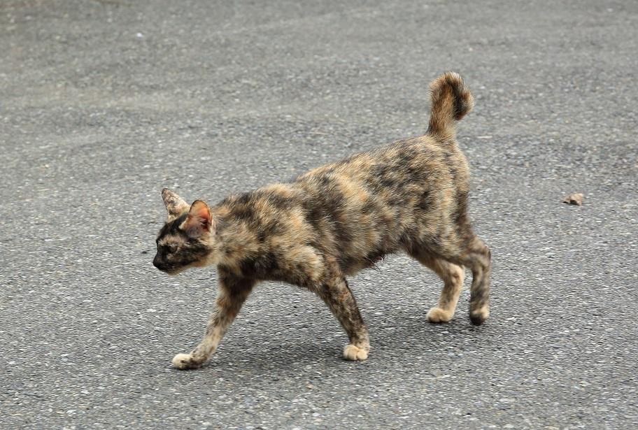 ブログ 猫ちゃん.jpg