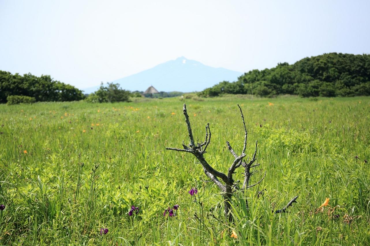 ブログ 花の盛りに合わなかったベンセ沼と岩木山.jpg