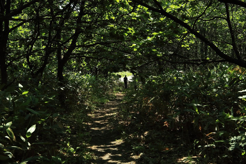ブログ 怪しい奴 ベンセの森を彷徨する.jpg