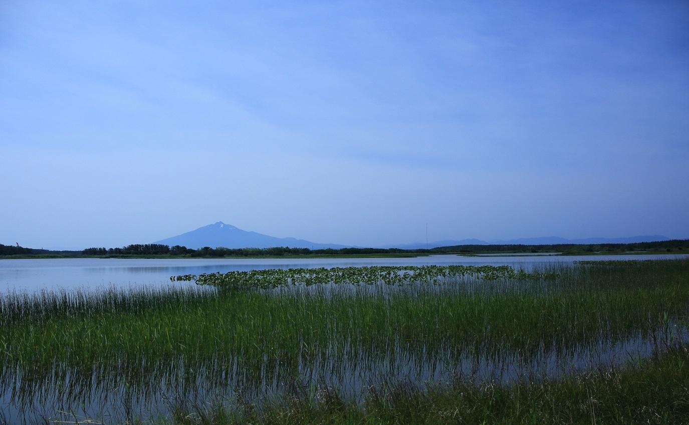 ブログ 沼から眺める岩木富士.jpg
