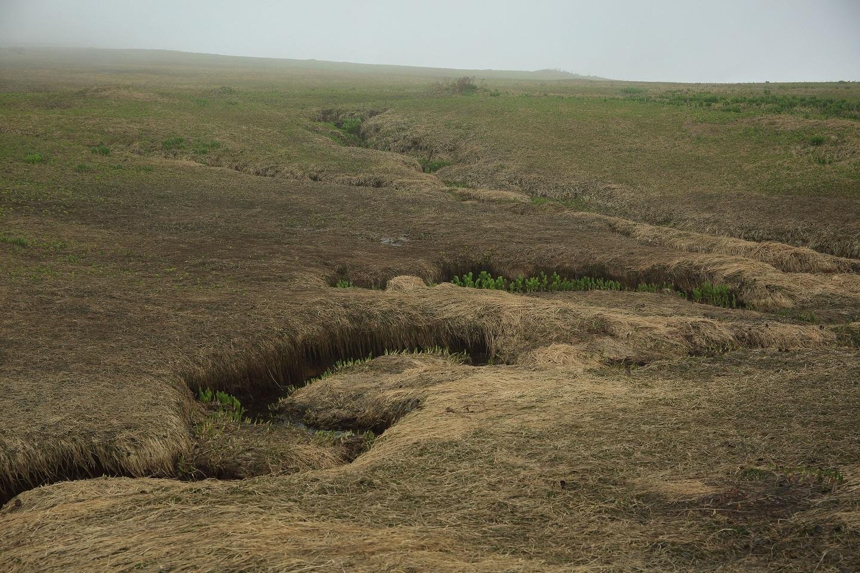 ブログ うねうねと流れる湿地に夏が来たら美しいはず.jpg