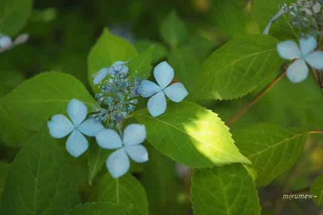 葉に光180602