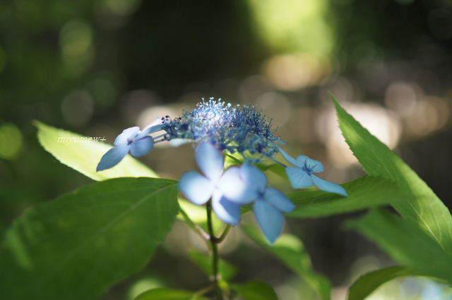 花に光180602