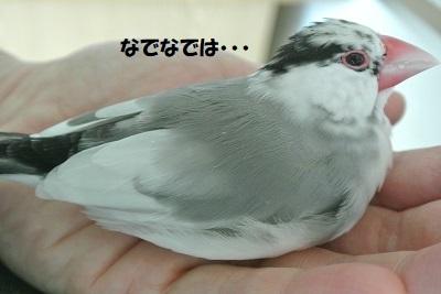 DSC_8563済