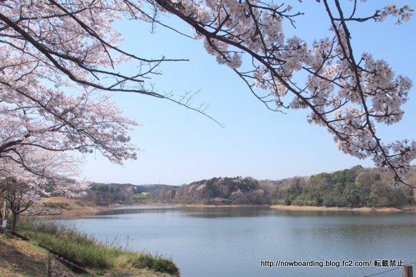 宮沢湖 桜 メッツァビレッジ ムーミンバレーパーク
