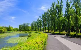 水元公園①
