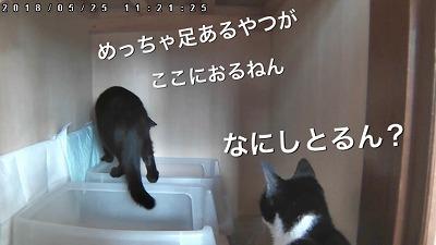 IMG-9491.jpg