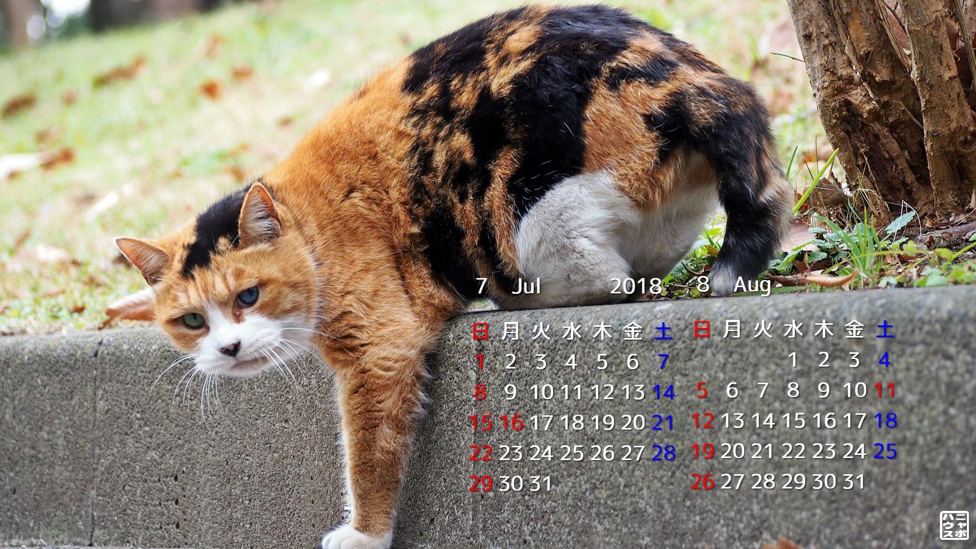 2018年7・8月 猫デスクトップカレンダー