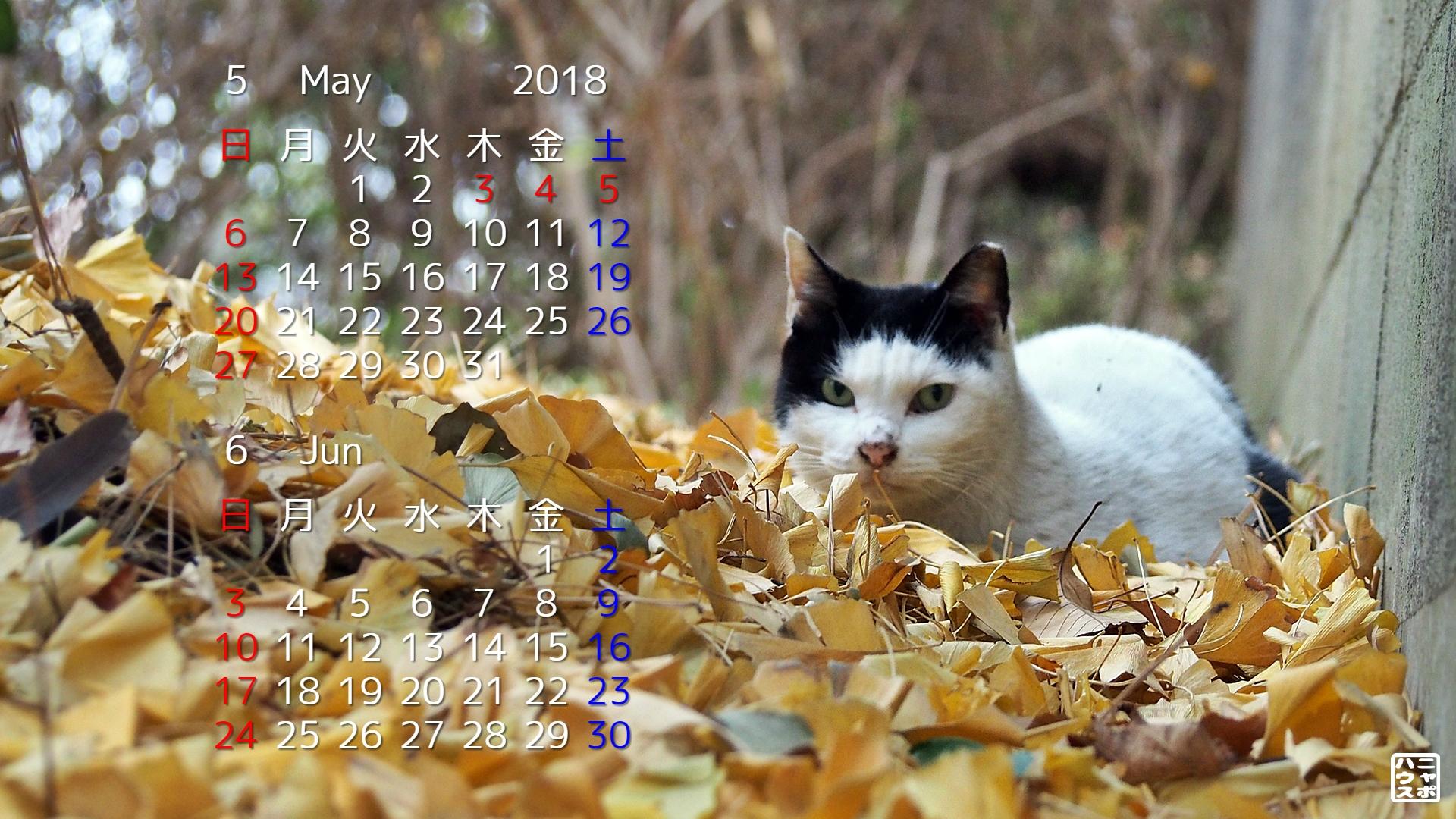 2018年5月・6月 猫デスクトップカレンダー