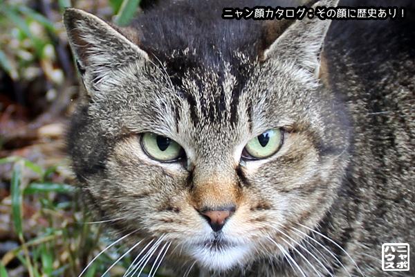 ニャン顔NO163 キジトラ猫さん