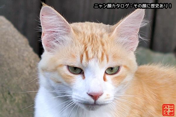 ニャン顔NO160 茶白猫さん