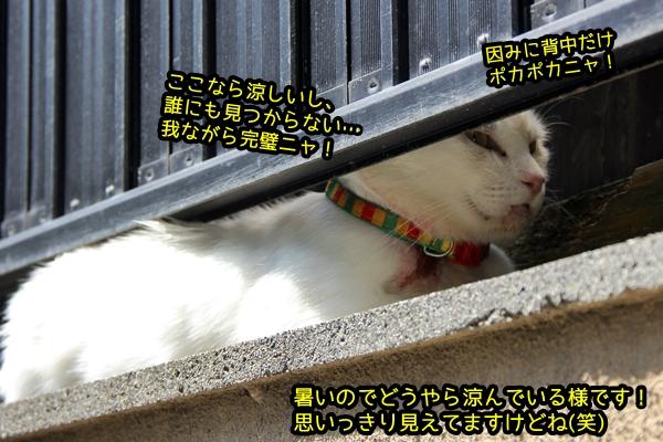 塀の隙間 白猫