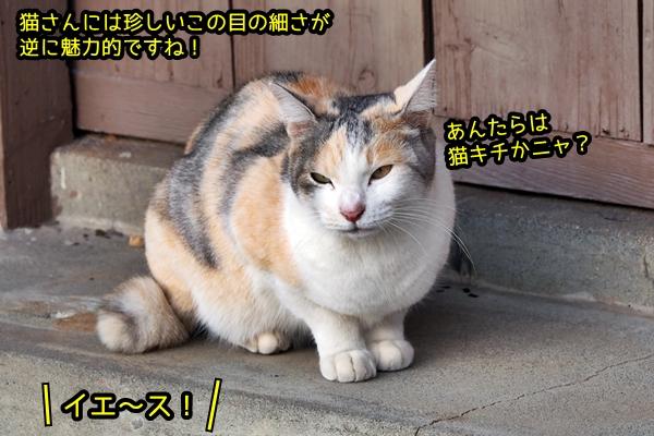 細目な三毛猫さん