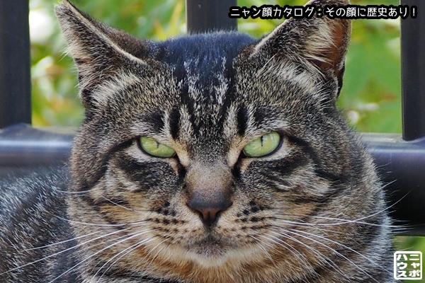 ニャン顔NO145 キジトラ猫さん