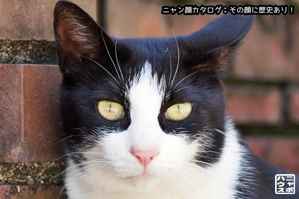 ニャン顔NO162 白黒猫さん