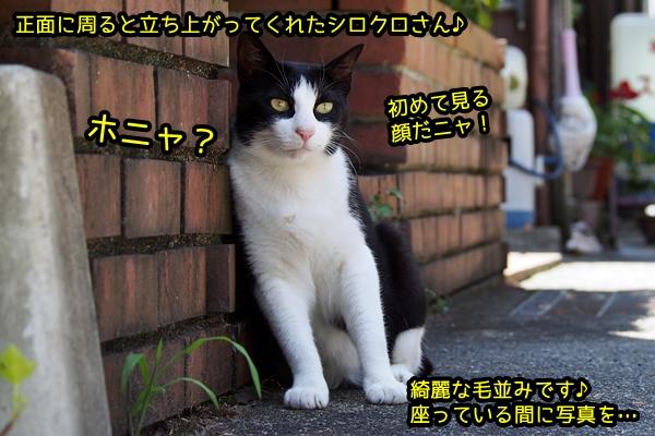 日陰 白黒猫