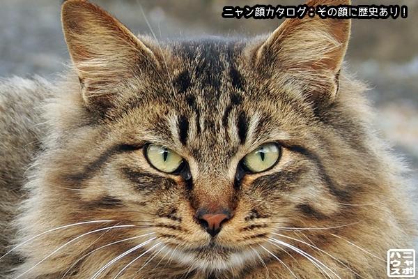 ニャン顔142 ロン毛のキジトラ猫さん