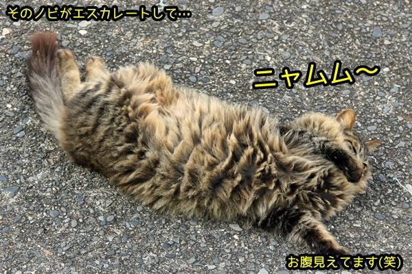 ボス猫 キジトラ