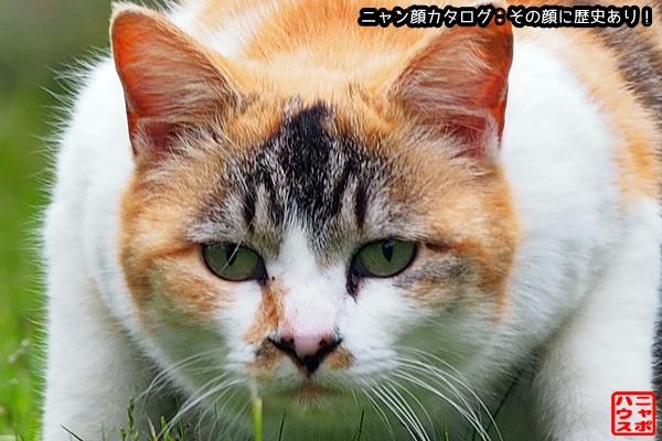 ニャン顔NO151 三毛猫さん♪