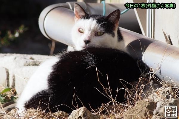 前髪パッツン 白黒猫