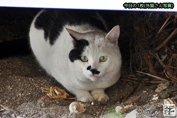 前髪 白黒猫