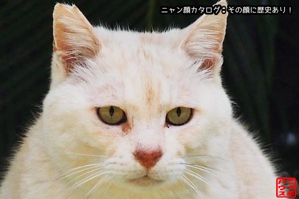 ニャン顔NO153 白トラ猫さん♪