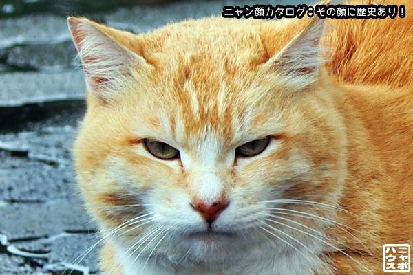ニャン顔NO143 チャシロ猫さん