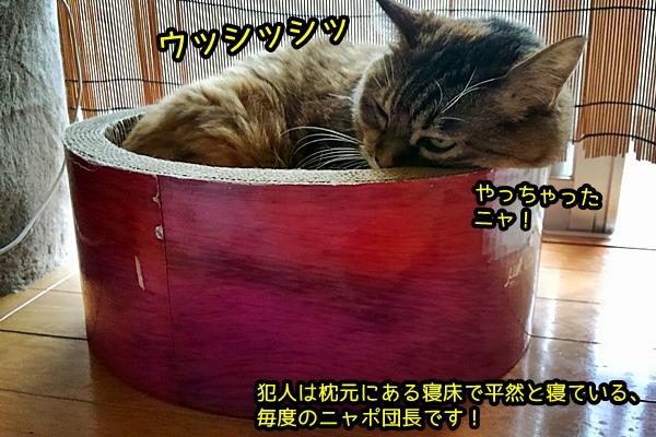 ニャポ 猫 便秘
