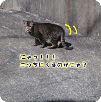 2018051115404184b.png