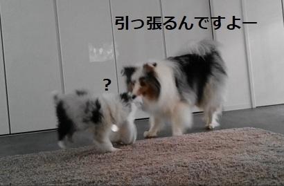 ぱらるぽにむ(3)