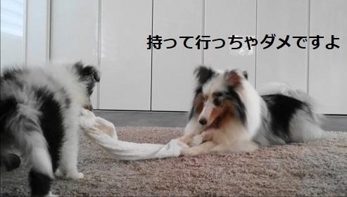 ぱらるぽにむ(8)