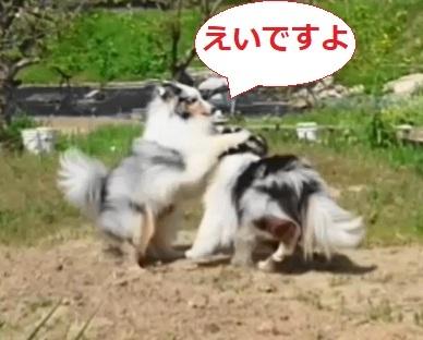 VID_37060617_181614_041(3).jpg