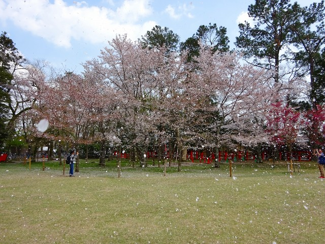 18,4,3 上賀茂神社 (5)