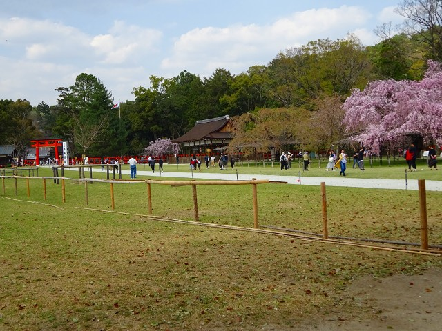 18,4,3 上賀茂神社 (6)