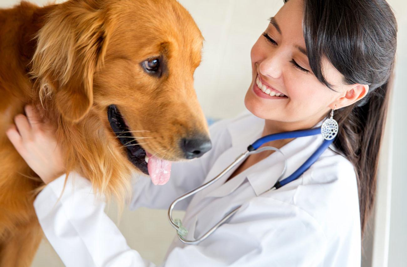 大切なペットを、「ゼッタイに」、そこら辺にいる獣医師に任せてはダメな理由❤