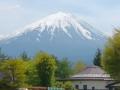 富士芝桜2 015