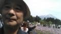富士芝桜まつり1 005