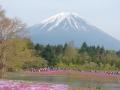 富士芝桜まつり1 018
