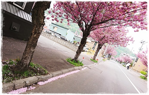 おうち13DSC_4649