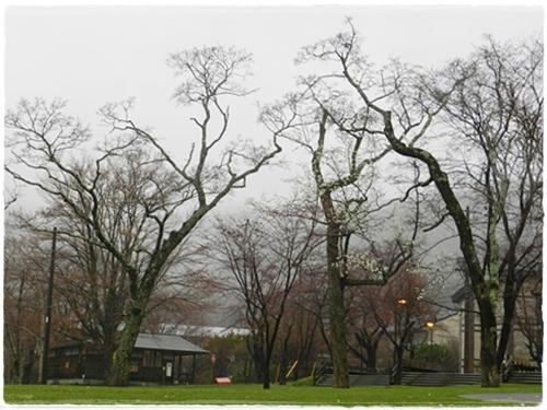 支笏湖公園