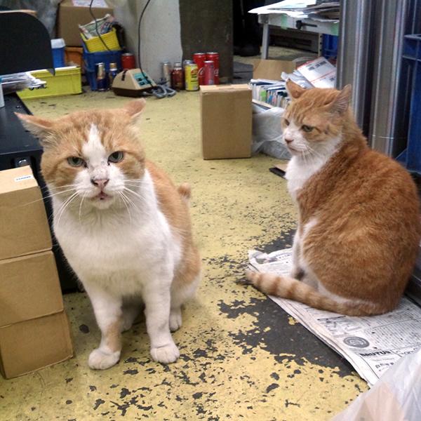 イワキ精工 蒲田 パンタレイ panta rhei 大田区 猫びより ボス猫 ねこ 猫 ざぼん