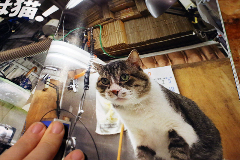 イワキ精工 蒲田 パンタレイ panta rhei 大田区 猫びより ボス猫 ねこ 猫 工場長