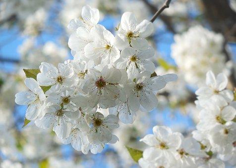 めでたい桜狩り~茶と華と・春の番外編~・11