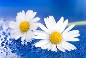 flower-1473704__340.jpg
