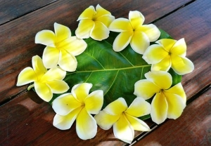 polynesia-1766922__340.jpg