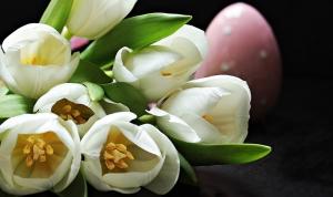 tulips-2091615_960_720.jpg