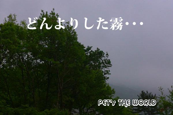 2018-05-17-01.jpg