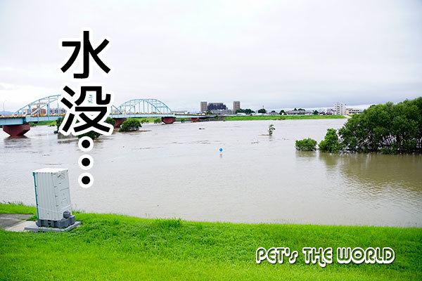 2018-07-07-08.jpg